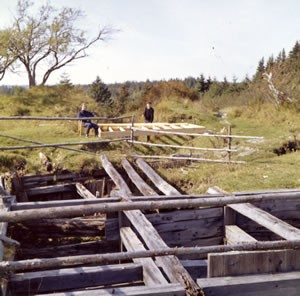 The Money Pit (Hedden and Chappell Shafts) as they appeared in Oct 1959 when the Restalls arrived on Oak Island.